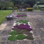 Thyme Beds